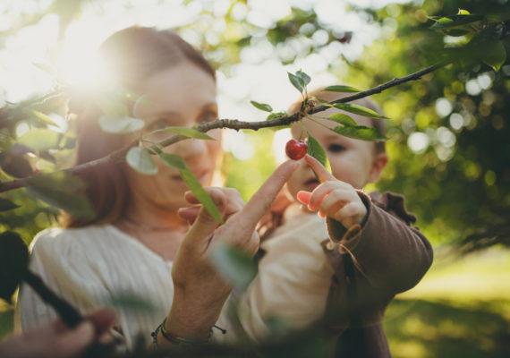 La magia del bosco di ciliegi – Foto di famiglia